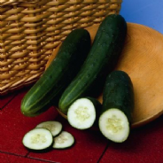 Cucumber Perfection - 25 Seeds / 100 seeds